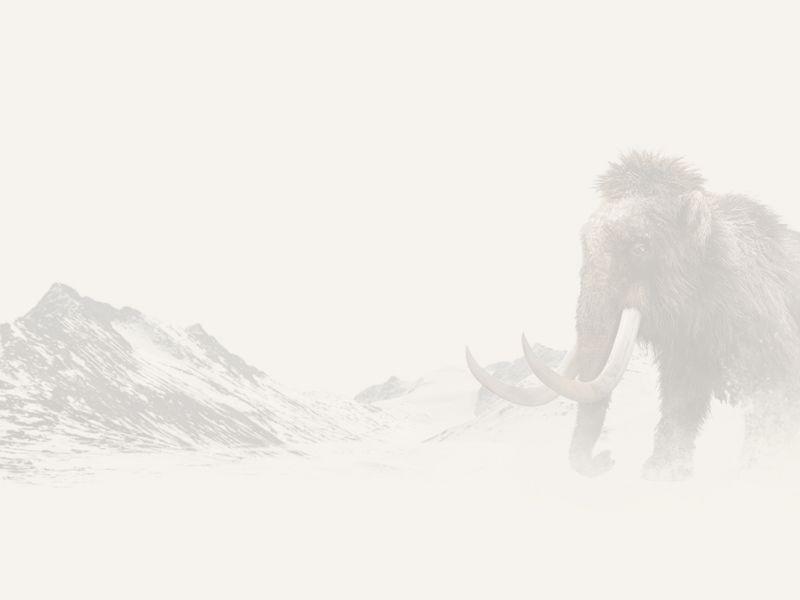 AUR_GOTIA_FooterBild_Mammut